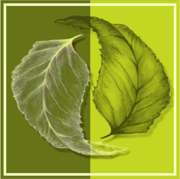 Logo Natürliche Gärten